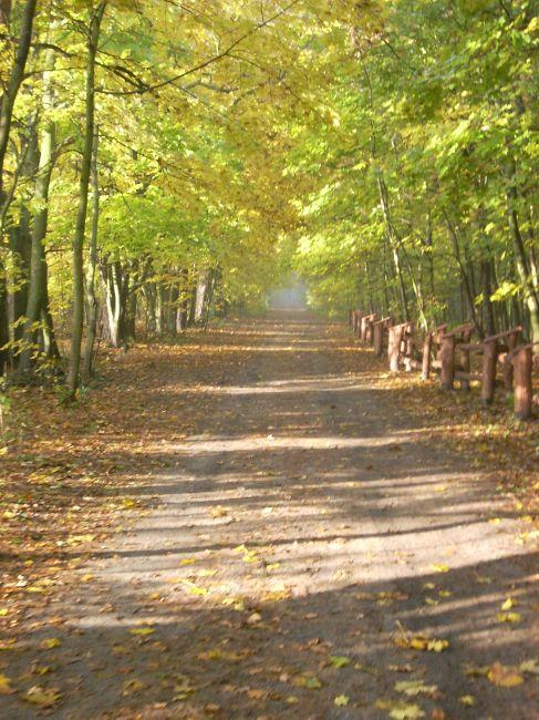 Zdjęcia: Las Kabacki, Mazowsze, Ciężka droga do pracy, jesień., POLSKA