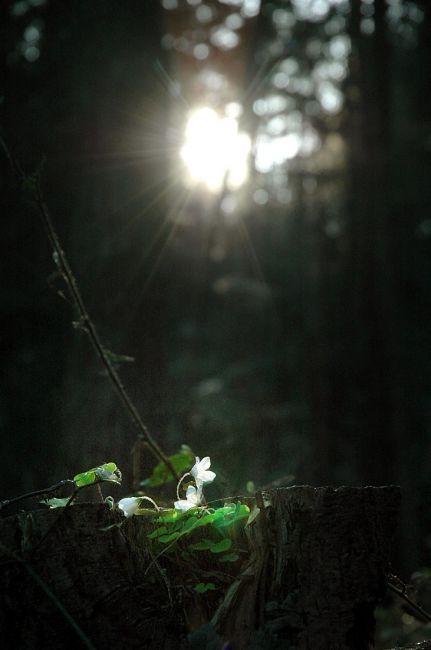 Zdjęcia: góra Chełm, Myślenice, KONKURS narodziny wiosny, POLSKA