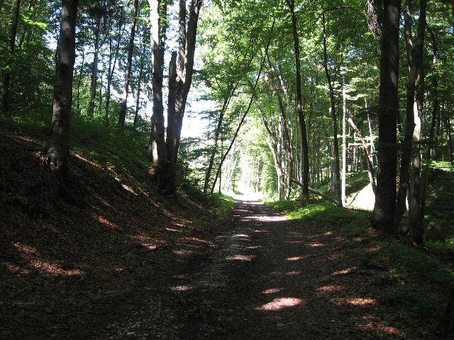 Zdjęcia: Góra Św.Anny, Ślask Opolski, entowy las, POLSKA