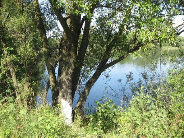 Zdjęcia: jezioro, Ślask Opolski, zieleń, POLSKA