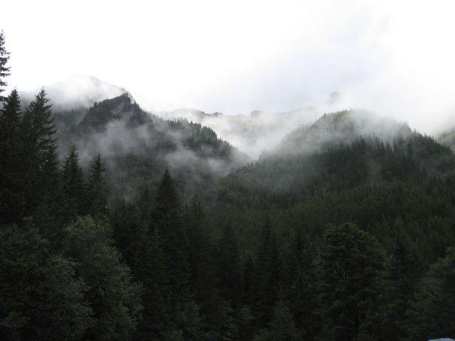 Zdjęcia: las, tatry, po deszczu, POLSKA