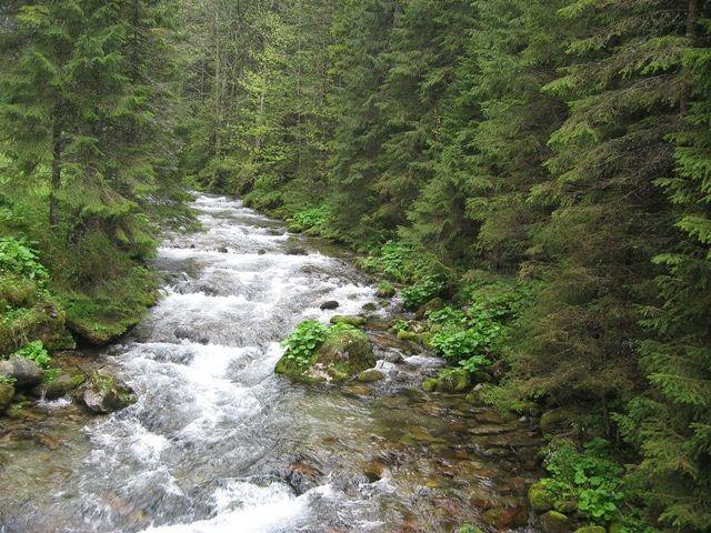 Zdjęcia: Dolina Kościeliska, Tatry, moje wędrówki po Tatrach...Gdzie szumią srebrzyste zdroje  melodię głazom nuconą ..., POLSKA