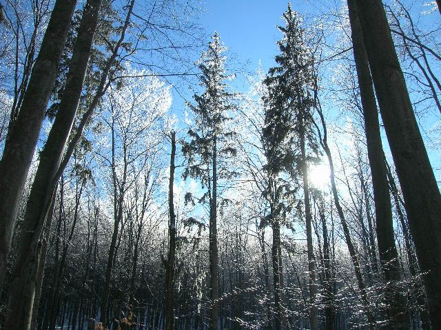 Zdj�cia: Kalenica, G�ry Sowie, zimowy las, POLSKA