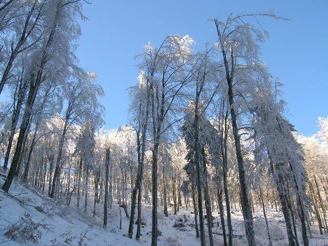 Zdjęcia: Kalenica, Góry Sowie, zimowy las, POLSKA