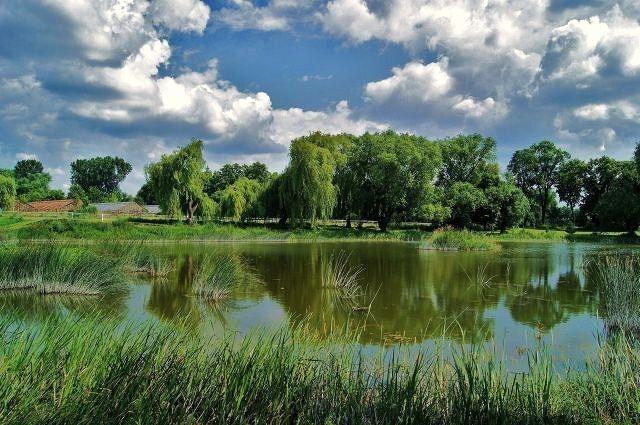 Zdjęcia: Zespół Pałacowo-Parkowy w Wierzchowiskach, lubelszczyzna, Lato w Wierzchowiskach, POLSKA