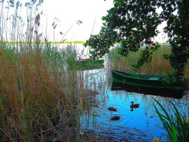 Zdjęcia: Morzyczyn, Zachodniopomorskie,  Jezioro Miedwie , POLSKA