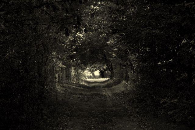 Zdjęcia: Dąbrówka, Droga, ktorą idę..., POLSKA