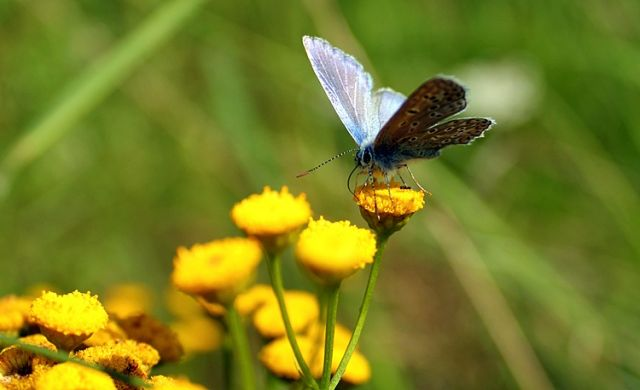Zdjęcia: Kołobrzeg, motylek, POLSKA