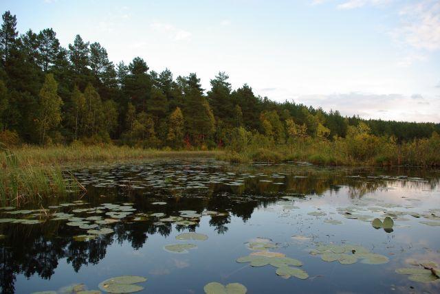 Zdjęcia: okolice Strzepcza, Kaszuby, lesne oczko, POLSKA
