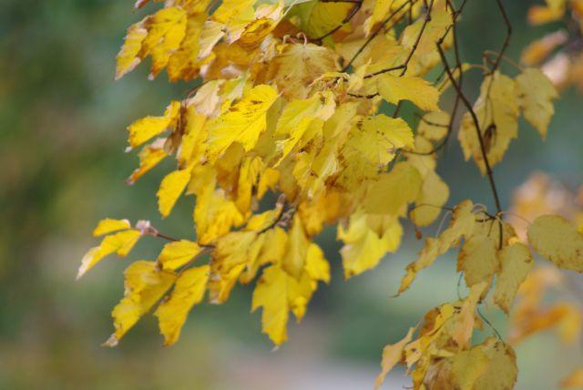 Zdjęcia: park botaniczny Poznan, wielkopolska, barwy jesieni, POLSKA