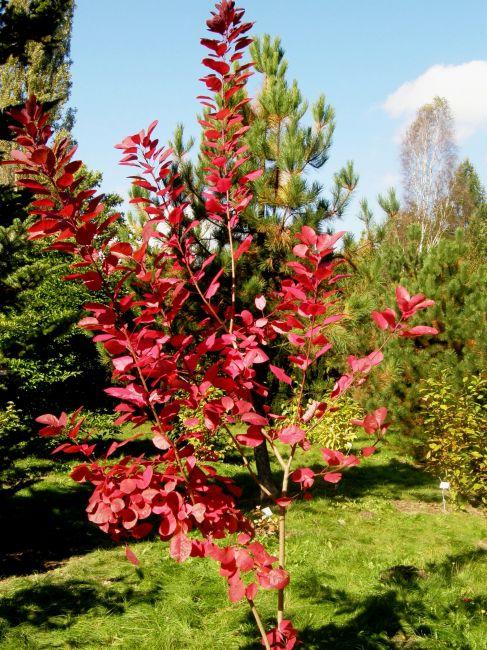 Zdjęcia: Ogród Botaniczny, Mazowsze, Niedziela w Powsinie, POLSKA