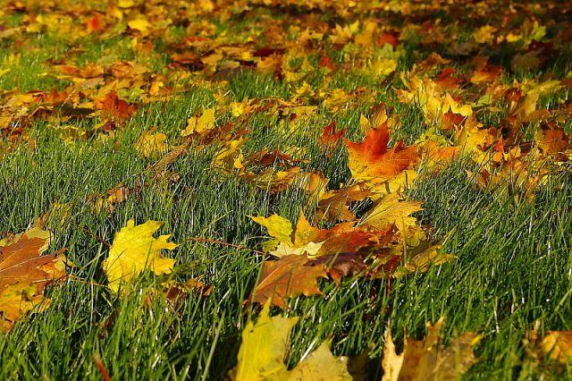 Zdjęcia: Kłonice, Dolny Śląsk, Kolory jesieni, POLSKA