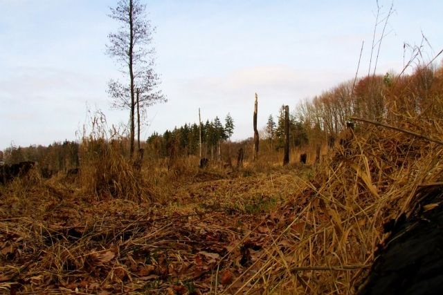 Zdjęcia: Ptasi gaj, nizina śląska, bagnisko, POLSKA