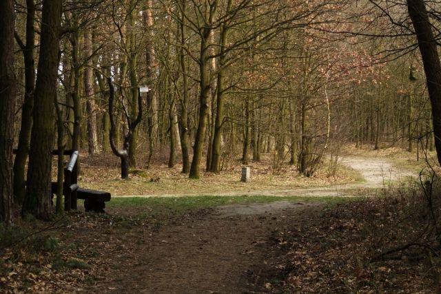 Zdjęcia: Ptasi gaj, nizina śląska, zaproszenie na spacer, POLSKA