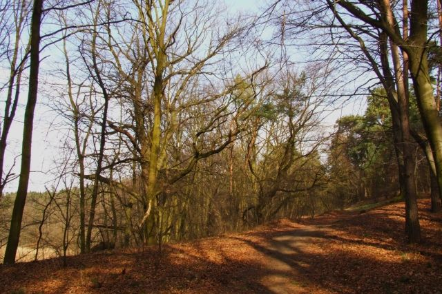 Zdjęcia: Ptasi gaj, nizina śląska, ścieżka, POLSKA