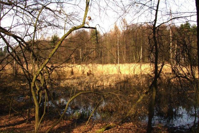 Zdjęcia: Ptasi gaj, nizina śląska, leśny staw, POLSKA