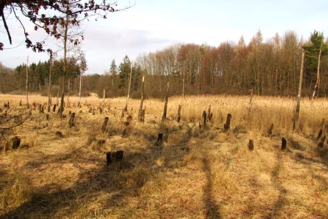 Zdjęcia: Ptasi gaj, nizina śląska, cmentarzysko, POLSKA