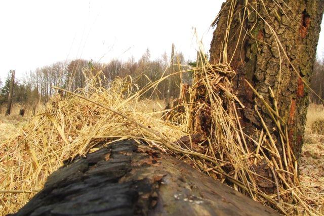 Zdjęcia: Ptasi gaj, nizina śląska, przewróciło się i leży, POLSKA