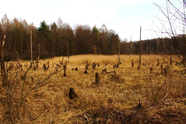 Zdjęcia: Ptasi gaj, nizina śląska, cmentarzysko 2, POLSKA