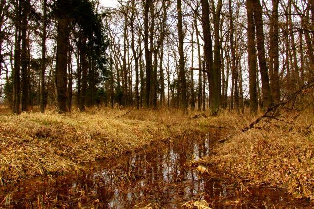 Zdjęcia: Ptasi gaj, nizina śląska, strumyk 2, POLSKA
