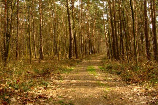 Zdjęcia: Ptasi gaj, nizina śląska, aleja 2, POLSKA