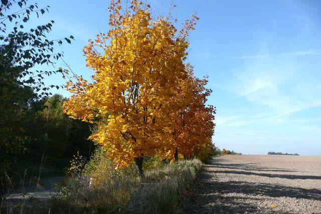 Zdjęcia: peryferie miasta, Dolny Śląsk, Złoty październik, POLSKA