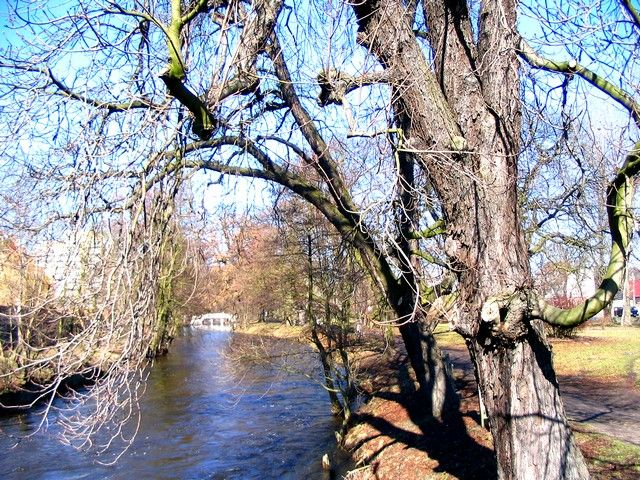 Zdjęcia: Stargard, Zachodniopomorskie, stay drzewostan nad Iną, POLSKA