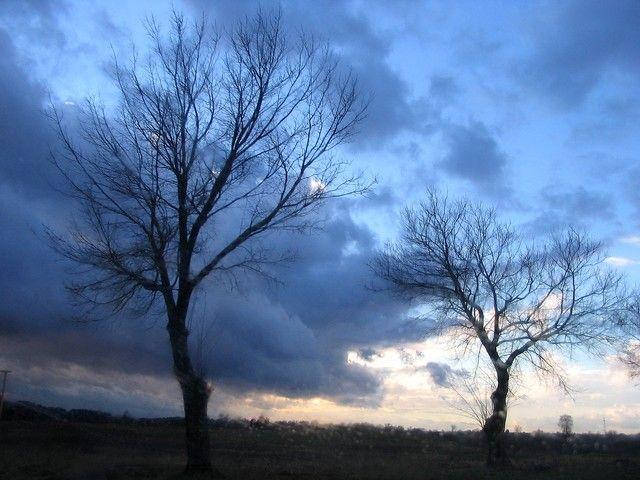 Zdjęcia: Biała, w pobliżu Chociwla, Zachodniopomorskie, drzewa -bez retuszu!, POLSKA