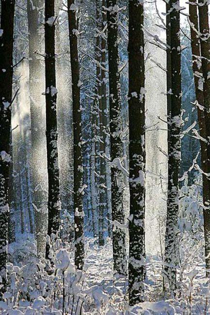 Zdjęcia: obszary lesne, Kujawsko-Pomorski, Sceneria zimowa, POLSKA
