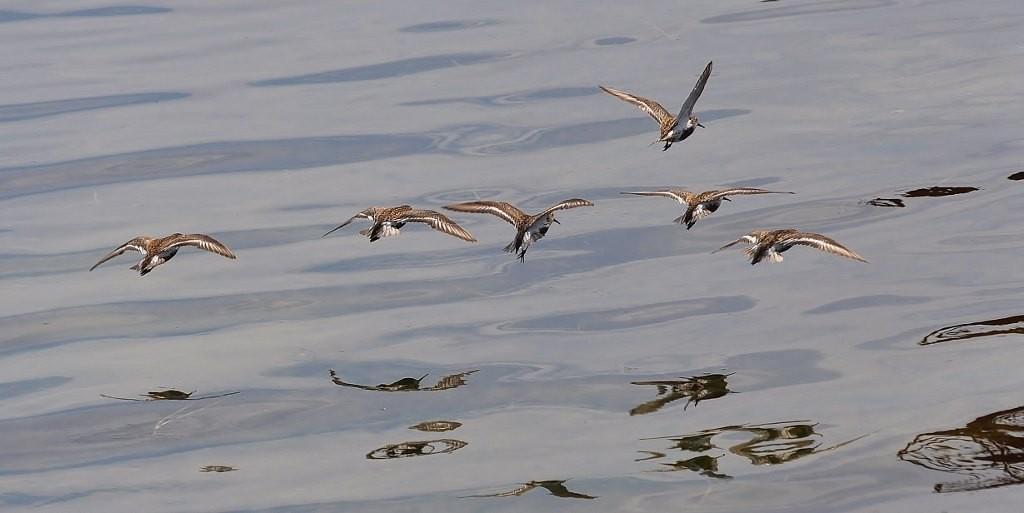 Zdjęcia: Jastarnia, Pomorze, Jastarnia, ptaki w porcie, POLSKA