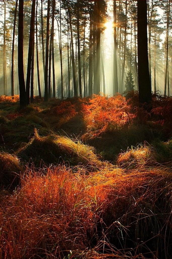 Zdjęcia: Kobiór, Śląsk, Konkurs :zapach lasu, POLSKA