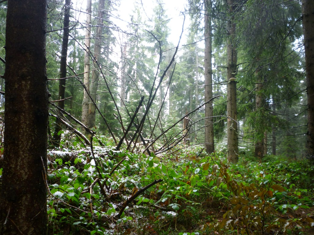 Zdjęcia: Gorce, Beskidy Zachodnie, KONKURS: pierwszy śnieg, natura, POLSKA
