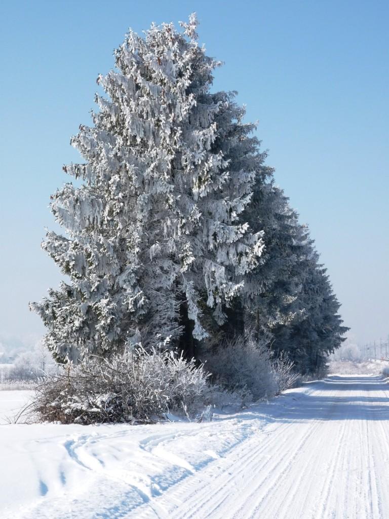 Zdjęcia: Mienia, Mazowieckie, Zima potrafi też być urokliwa, POLSKA