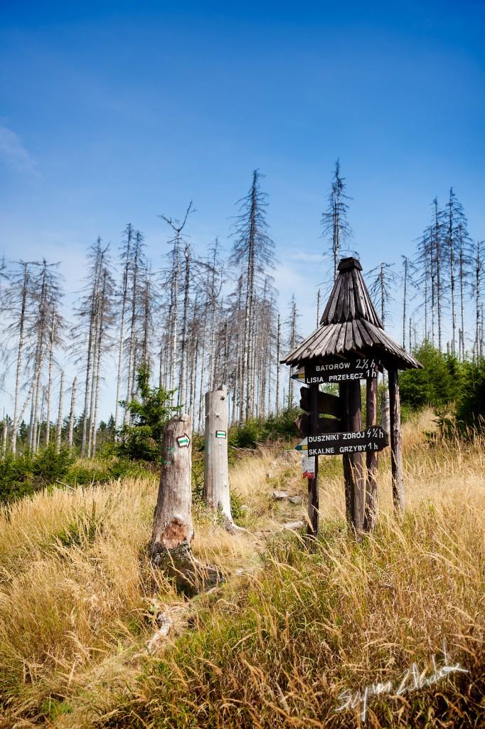 Zdjęcia: Góry Stołowe, POLSKA