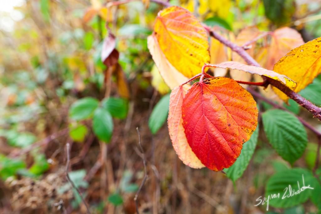 Zdjęcia: Rudawy Janowickie, Barwy jesieni, POLSKA