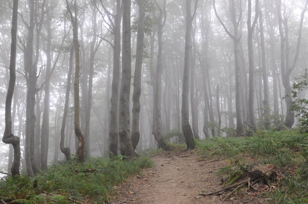 Zdjęcia: Okrąglik, Bieszczady, Konkurs - Tam wrócę - bukowy las, POLSKA