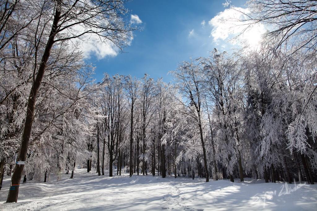 Zdjęcia: Góry Sowie, Rozdroże pod Moszną, POLSKA
