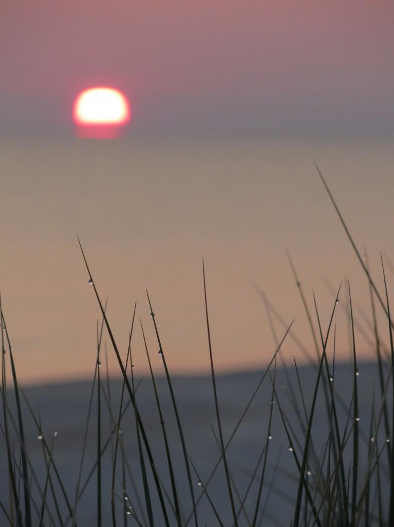Zdjęcia: plaża w Białogórze, Kaszuby, poranna rosa..., POLSKA