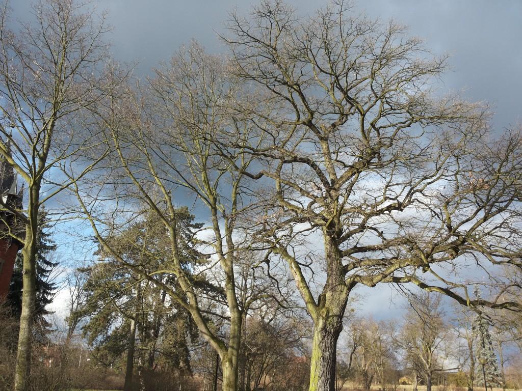 Zdjęcia: Pławniowice, Śląsk, drzewa, POLSKA