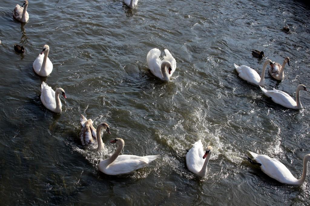 Zdjęcia: rzeka , śląskie, srebro i biel, POLSKA