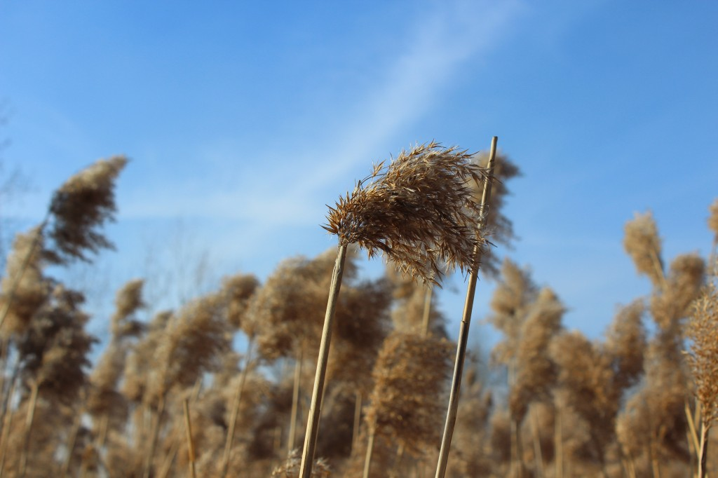 Zdjęcia: łąka w mieście, śląskie, wiatr, POLSKA