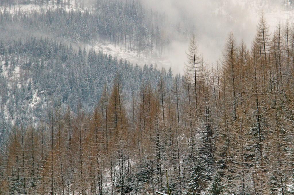 Zdjęcia: Boczań,  - , Góry 1, POLSKA