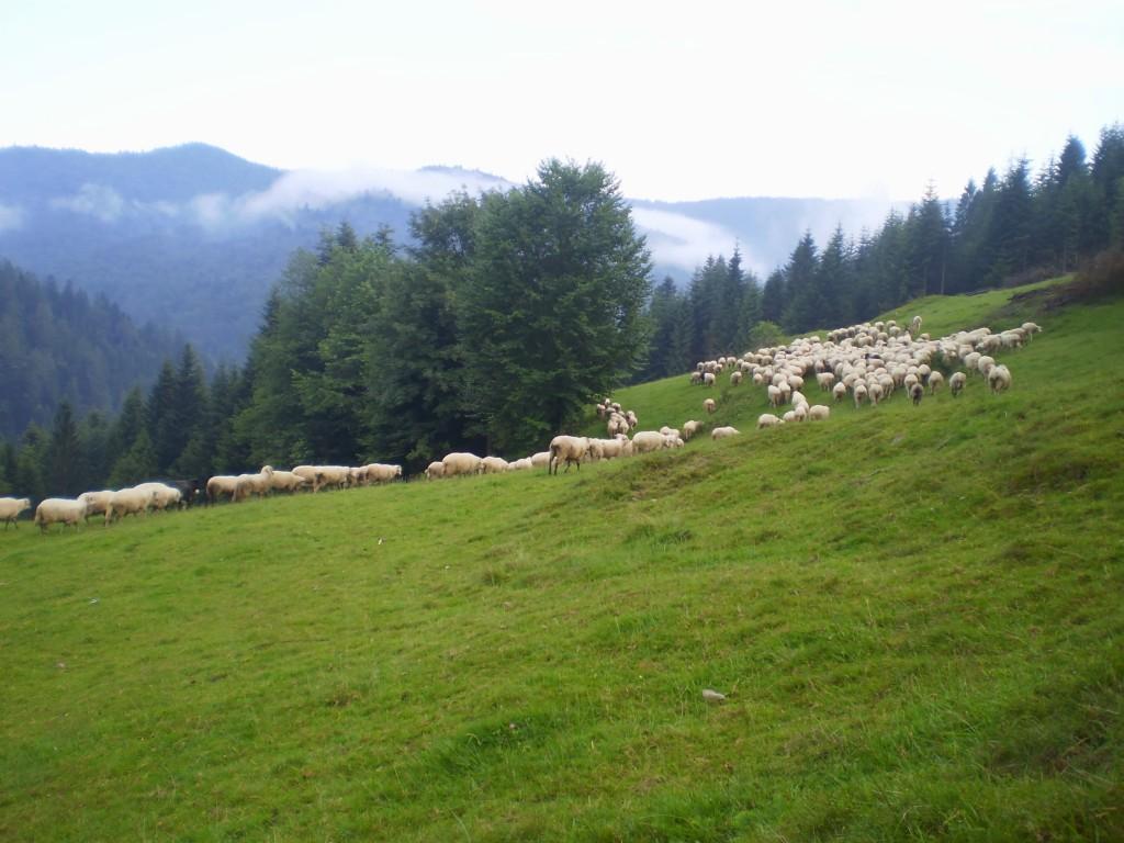 Zdjęcia: Gorczański Park Narodowy, Gorce, Tak piękne Gorce... , POLSKA