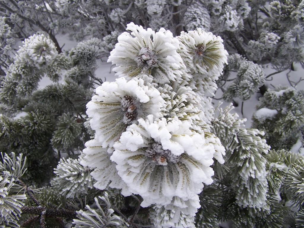 Zdjęcia: w drodze na Babią , Babiogórski Park Nardowy, W zimowej odsłonie IV, POLSKA
