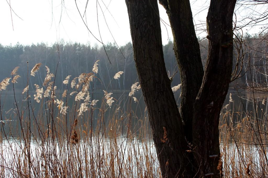 Zdjęcia: park Leśna, woj. śląskie, szuwary, POLSKA