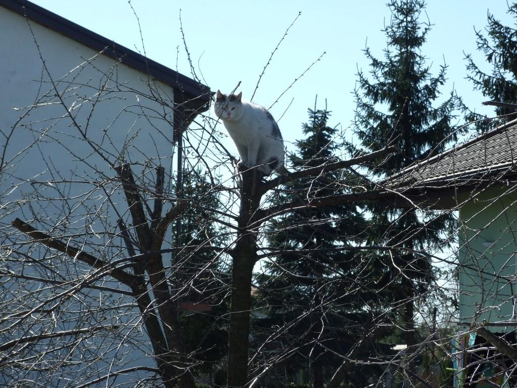 Zdjęcia: Mazowsze, Na wiosnę koty zakładają gniazda, POLSKA