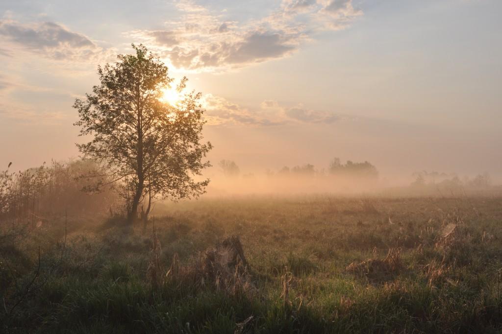 Zdjęcia: między Jeziorzanami a Sobieszynem, Mazowsze, O poranku, POLSKA