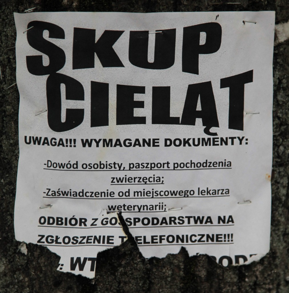 Zdjęcia: Dukla, Beskid niski, Ogłoszenie, POLSKA