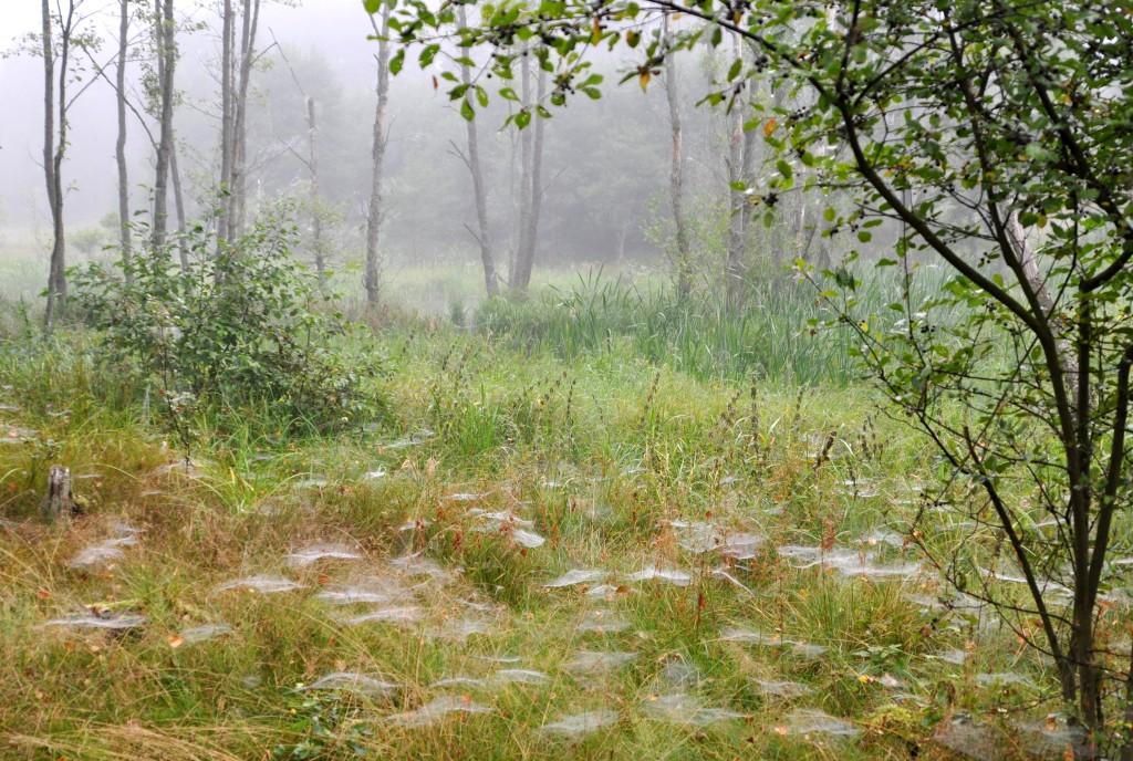 Zdjęcia: gdzieś za jeziorem Wdzydze, szlak Wdy, Pajęczyny, POLSKA