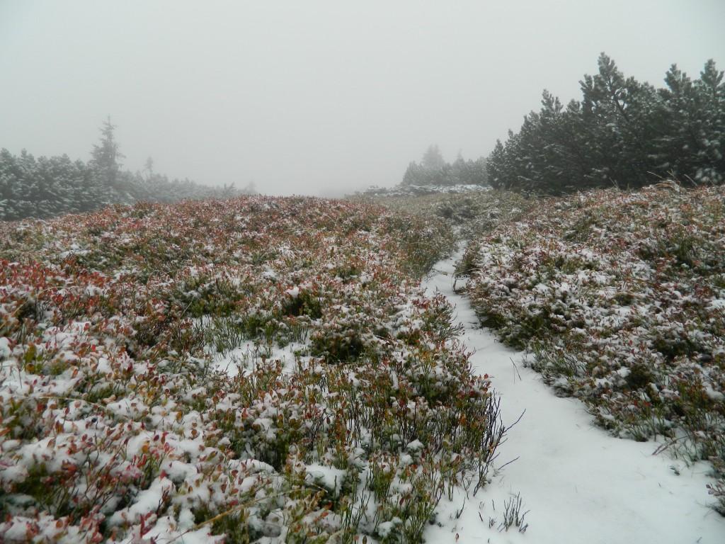 Zdjęcia: masyw pilska, Beskid, Pilsko we mgle i śniegu 23.09.14, POLSKA